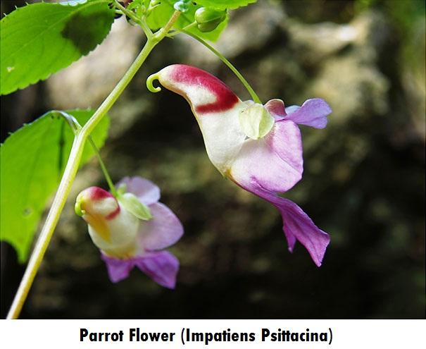 flowers-look-like-animals-people-monkeys-orchids-pareidolia-22