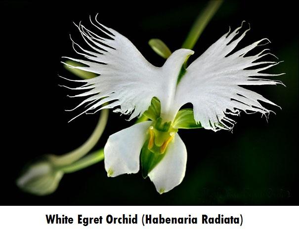 flowers-look-like-animals-people-monkeys-orchids-pareidolia-30